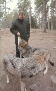 Ett jobb som Dick uppenbarligen accepterade att göra. Ett besök bland Kolmårdens vargar. Numera är detta förbjudet sedan den tragiska olyckan för några år sedan då en djurskötare avled.